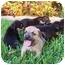 Photo 1 - Shepherd (Unknown Type) Mix Puppy for adoption in White Settlement, Texas - Jada's Lambert