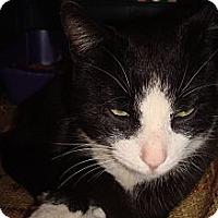 Adopt A Pet :: Tux - Brooklyn, NY