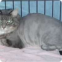 Adopt A Pet :: Mimi - Westfield, MA