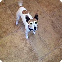Adopt A Pet :: LUCY III - Scottsdale, AZ