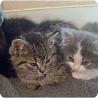 Adopt A Pet :: kittens *courtesy - Xenia, OH