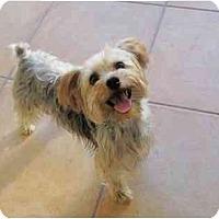 Adopt A Pet :: Andy - West Palm Beach, FL