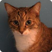 Adopt A Pet :: Beyonce - West Des Moines, IA