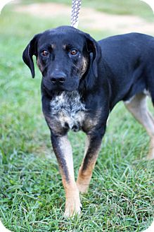Rottweiler Mix Dog for adoption in Waldorf, Maryland - Jake