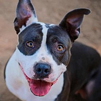 Adopt A Pet :: COURTESY LISTING: Delilah - San Diego, CA
