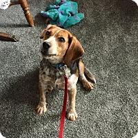 Adopt A Pet :: Dixie - Hillsboro, IL