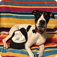 Adopt A Pet :: Sally Ride - Garden City, MI