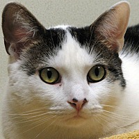 Adopt A Pet :: Patch - Norwalk, CT