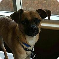 Adopt A Pet :: Frankie - Duchess, AB