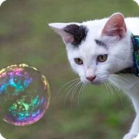 Adopt A Pet :: Yoda - Gainesville, FL