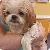 Adopt A Pet :: 17-07-2263 Mark - Dallas, GA