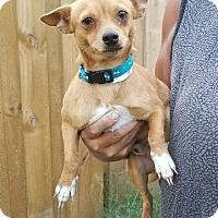 Adopt A Pet :: Quinton - Osteen, FL