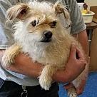 Adopt A Pet :: Cashew (Has Application)