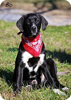 Labrador Retriever/Hound (Unknown Type) Mix Puppy for adoption in Wilmington, Delaware - BO