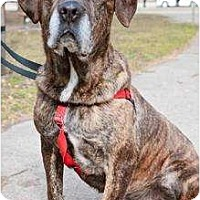 Adopt A Pet :: Dimitry - Rochester, NY