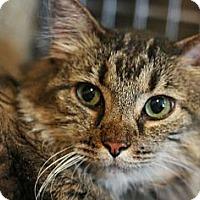 Adopt A Pet :: Lily - Canoga Park, CA