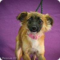 Adopt A Pet :: Corona - Broomfield, CO