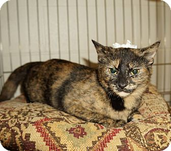 Domestic Shorthair Cat for adoption in Lexington, North Carolina - Madeline