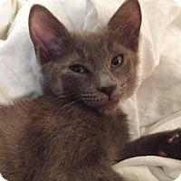Adopt A Pet :: Cuinn - North Highlands, CA