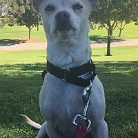Adopt A Pet :: Lionel - Phoenix, AZ
