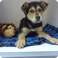 Adopt A Pet :: Einstein - Manning, SC