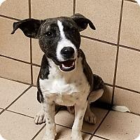 Adopt A Pet :: Junior - San Antonio, TX