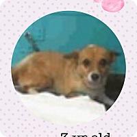 Adopt A Pet :: Tammy - Las Vegas, NV