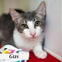 Adopt A Pet :: Gus 17-0140 - Richardson, TX