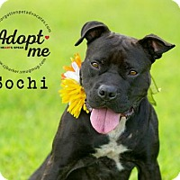 Adopt A Pet :: Sochi - Pearland, TX