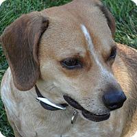 Adopt A Pet :: Tucker - ST LOUIS, MO