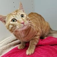 Adopt A Pet :: Alonso - Lynnwood, WA