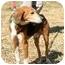 Photo 2 - Hound (Unknown Type) Mix Dog for adoption in Palmyra, Virginia - Tango
