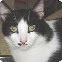 Adopt A Pet :: Indiana - Miami, FL