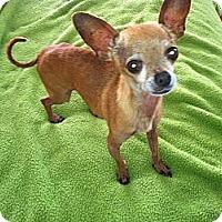 Adopt A Pet :: Colby - Poulsob, WA
