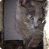 Adopt A Pet :: Gracie - East Hanover, NJ