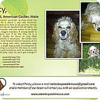 Adopt A Pet :: Percy - Ottawa, ON