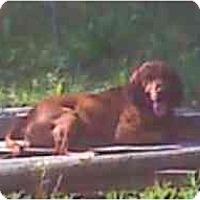 Adopt A Pet :: Nolan - Carrollton, GA