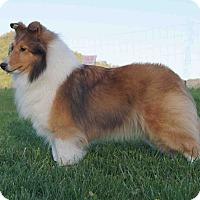 Adopt A Pet :: Kaira - Alderson, WV