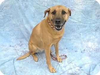 Shepherd (Unknown Type) Mix Dog for adoption in Pico Rivera, California - Jade