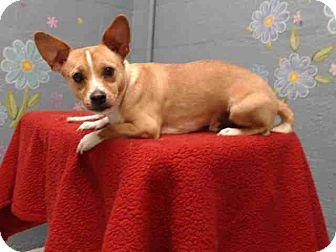Welsh Corgi Mix Dog for adoption in Lomita, California - Charlie