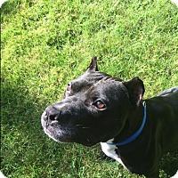 Adopt A Pet :: Apollo - Long Beach, NY