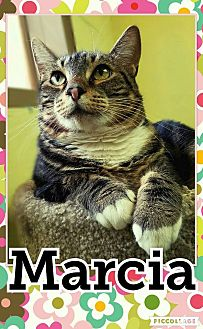 Domestic Shorthair Cat for adoption in Edwards AFB, California - Marcia