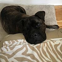 Adopt A Pet :: Bella - LAKEVILLE, MA