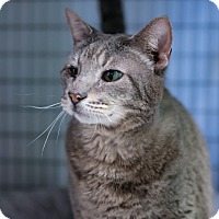 Adopt A Pet :: Phillip - Houston, TX