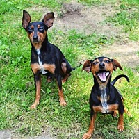Adopt A Pet :: Doris and Toby BONDED PAIR - Pittsburgh, PA
