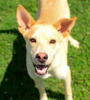 Mixed Breed (Large) Mix Dog for adoption in Greenwood, South Carolina - Harris