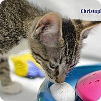 Adopt A Pet :: Christopher - Miami Shores, FL