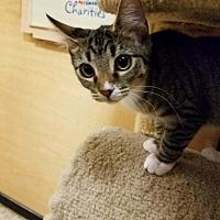 Adopt A Pet :: Lorna - Whittier, CA