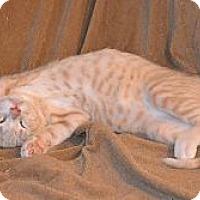 Adopt A Pet :: Pumpkin - Fort Worth, TX