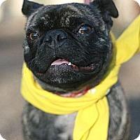 Adopt A Pet :: Beenie AKA Hercules - Canoga Park, CA